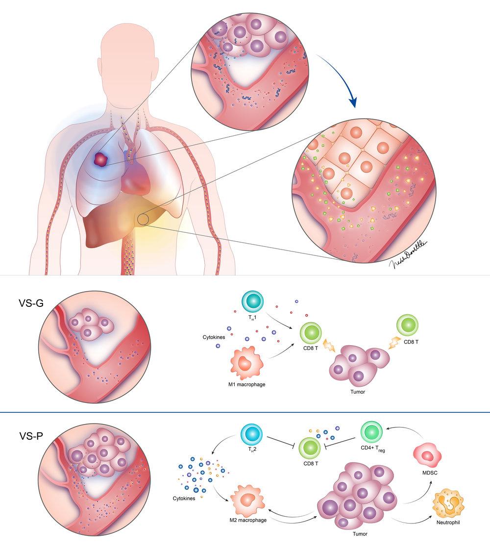 Tumor Environment