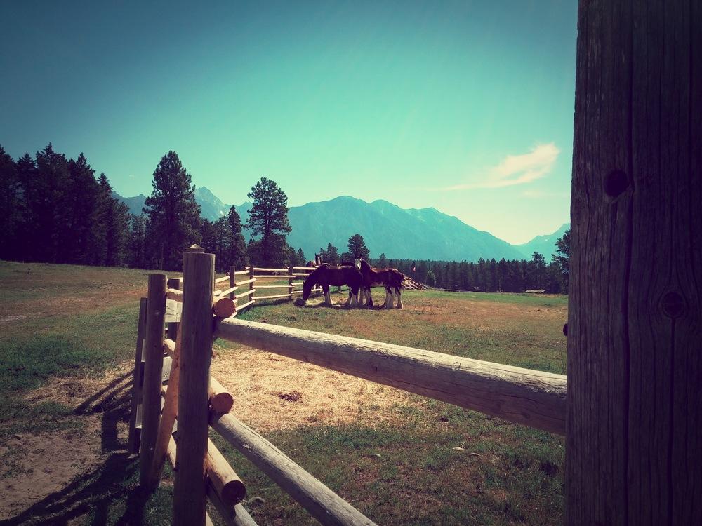 FORTE-STEELE-horses.jpg