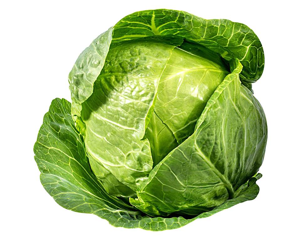 Sunday, February 17th - Cabbage Day Hunt | In search of the Cabbages! Come celebrate National Cabbage Day at Kimberley Alpine Resort! Find the Cabbages hidden around the Resort. Prizes to be won! All ages welcome!Date: Sunday, Feb 17 | Time: 1pm at Kids Tent in Plaza* Hosted by Kimberley Alpine Resort