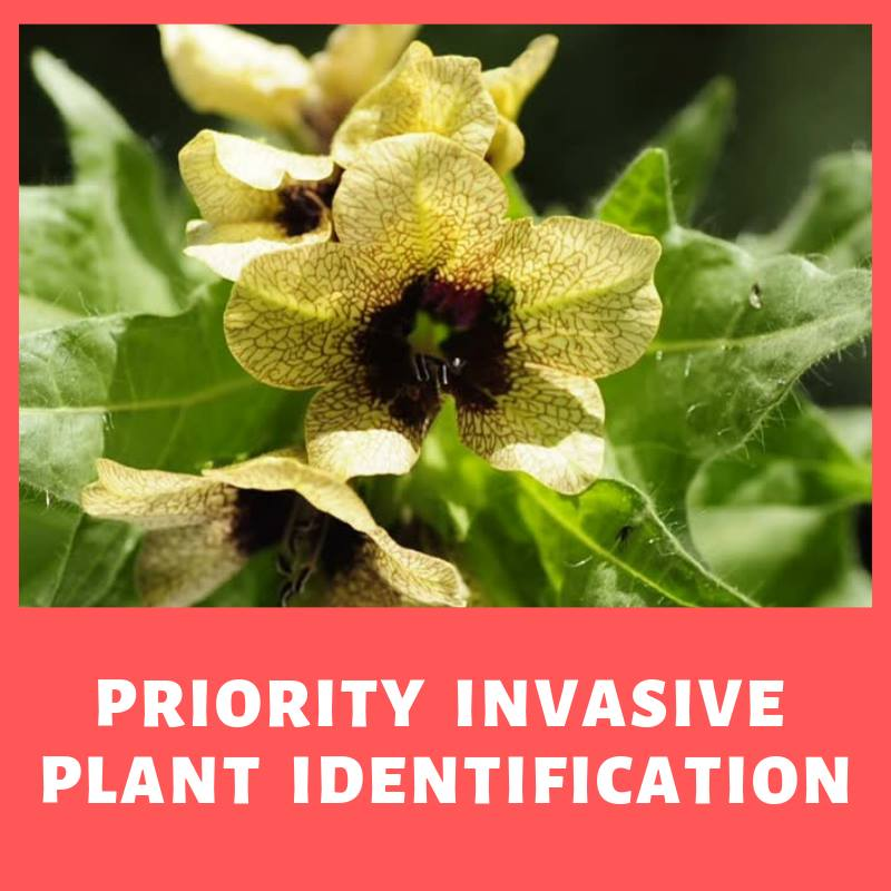 MONDAY, FEBRUARY 25th - Priority Plant ID | This professional level course identifies the top priority invasive plant species across the East Kootenay region. These species have known sites in the region with varying degrees of establishment. Proper identification of these species is critical to preventing new infestations. More information and registration at: ekisc.com/eventregistration* Hosted by East Kootenay Invasive Species Council - EKISC