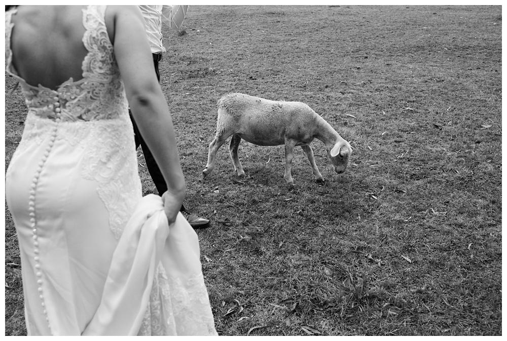 037 Gum Gully Farm Wedding.jpg