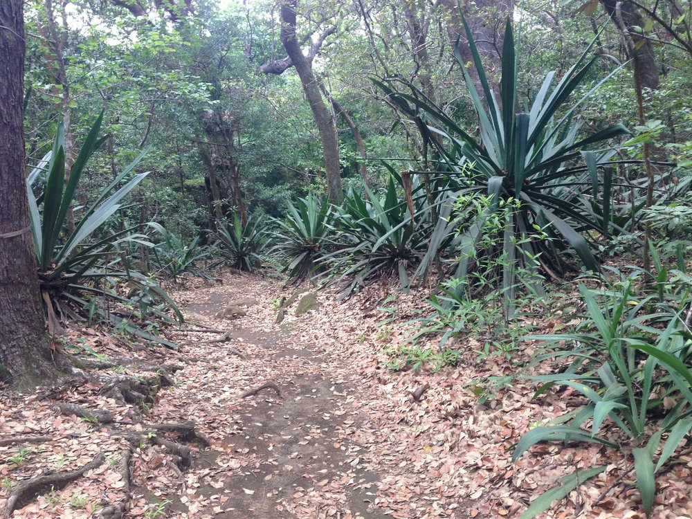 Vegetation along the trail in Rincon de la Vieja