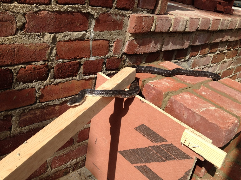 structural masonry, friendly snake inspects the work at hand
