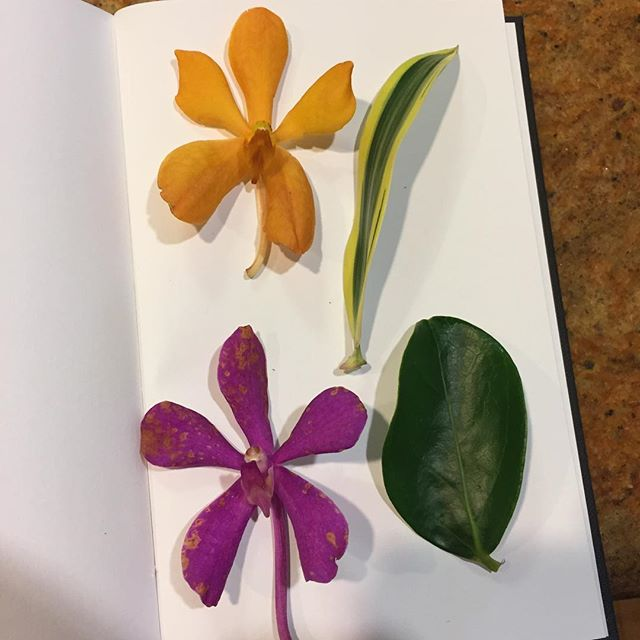 I shall now attempt a flower pressing (don't judge) to commemorate my Hawaiian adventures. #donttrythisathome