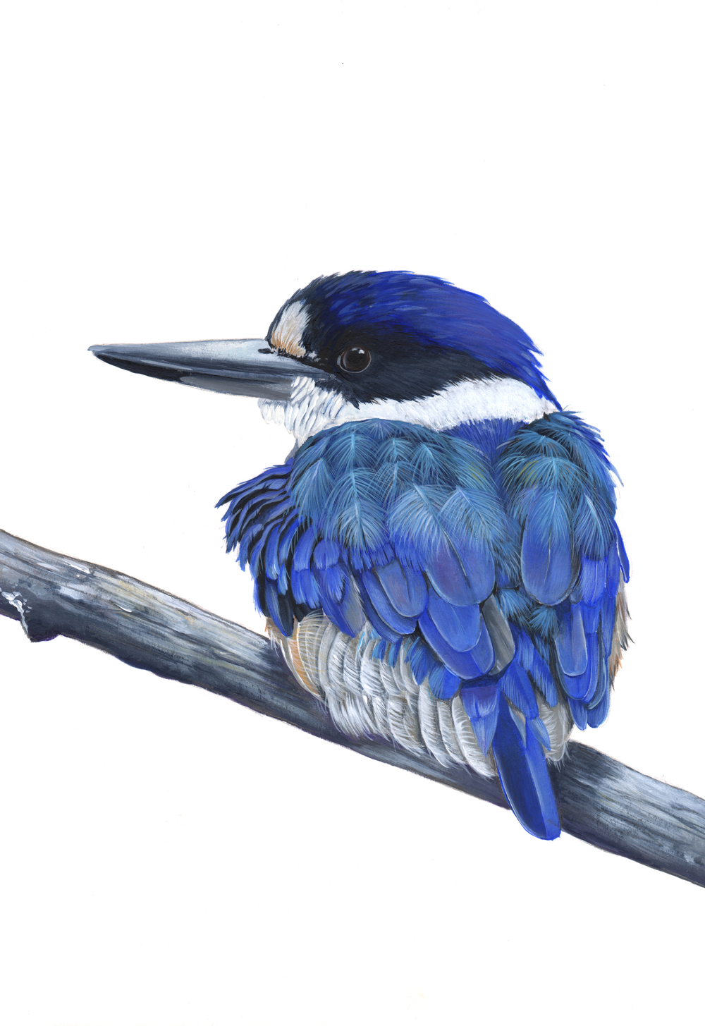 My little KIngfisher in acrylic paint.