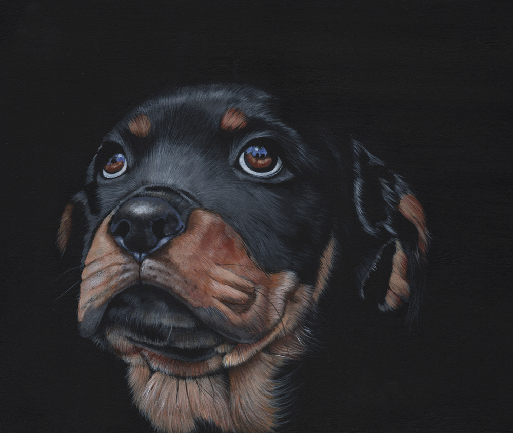 A little Rotty in acrylic paint.