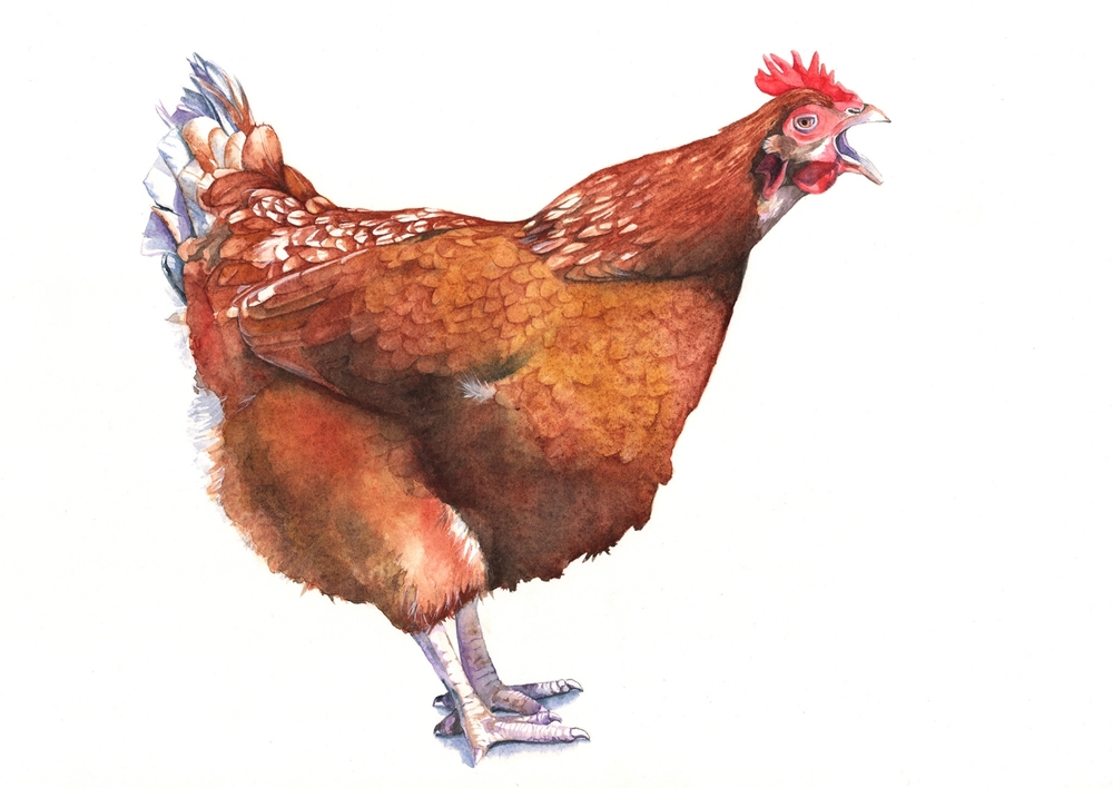 Henrietta in watercolour.