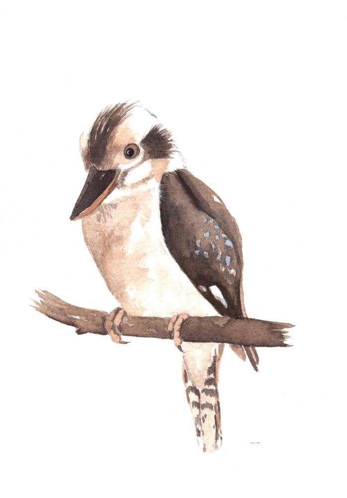 kookaburra-first-one.jpg