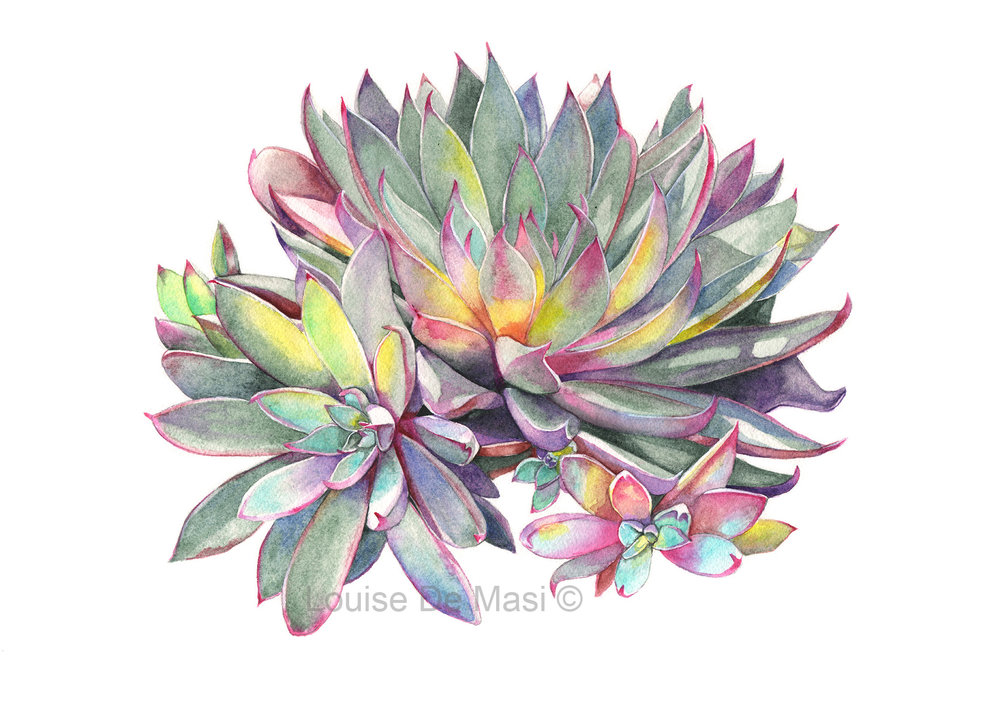 Succulent -PS-S316-reduced for Etsy..jpg