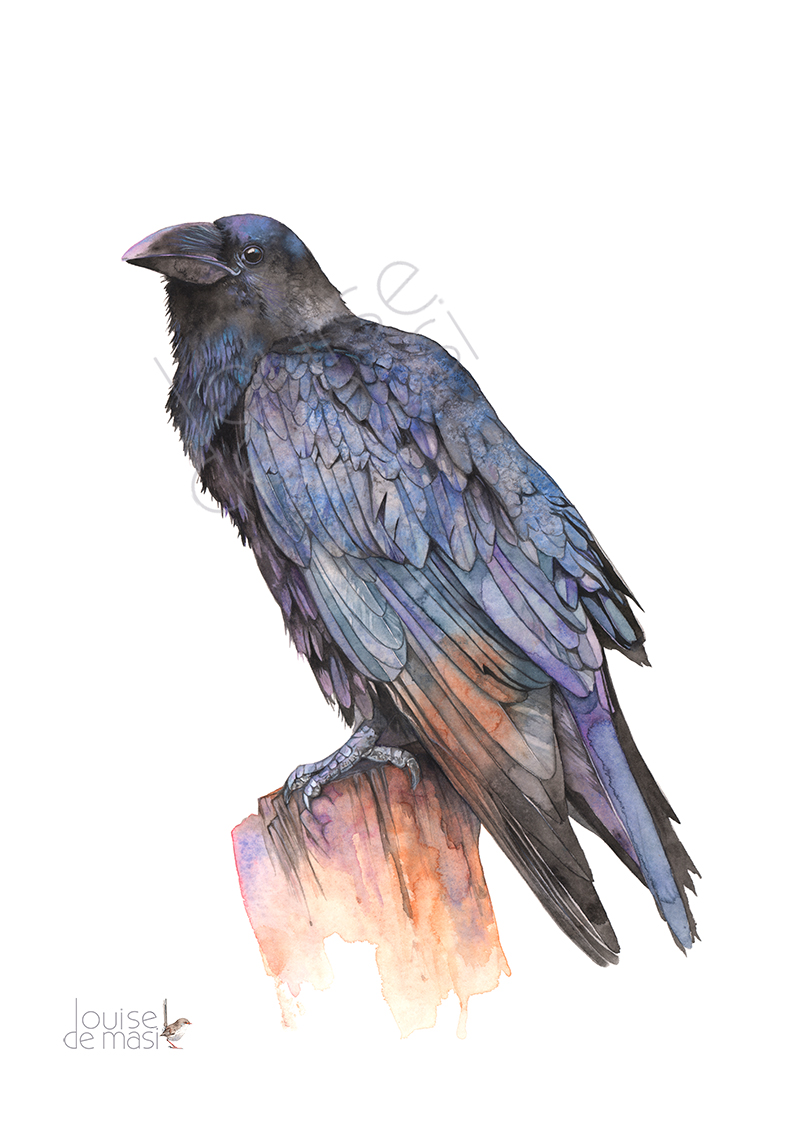 Crow 2017 Watercolour on paper.