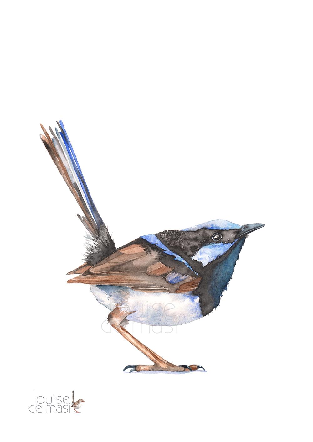 Fairy Wren Watercolour on paper.