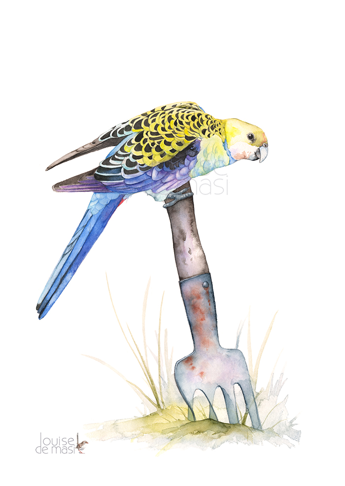 Pale Headed Rosella Watercolour on paper.