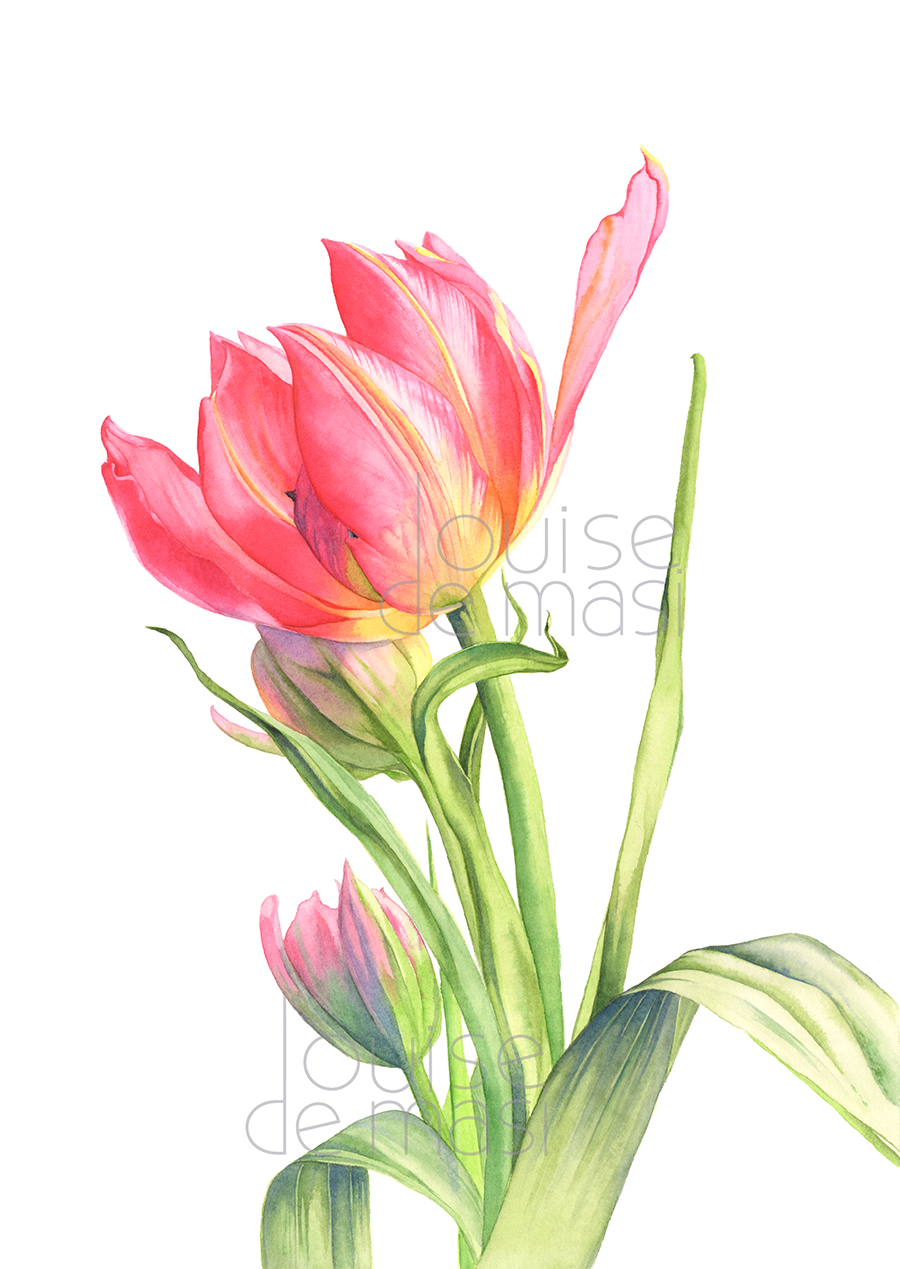 Tulip Pixel reduced.jpg
