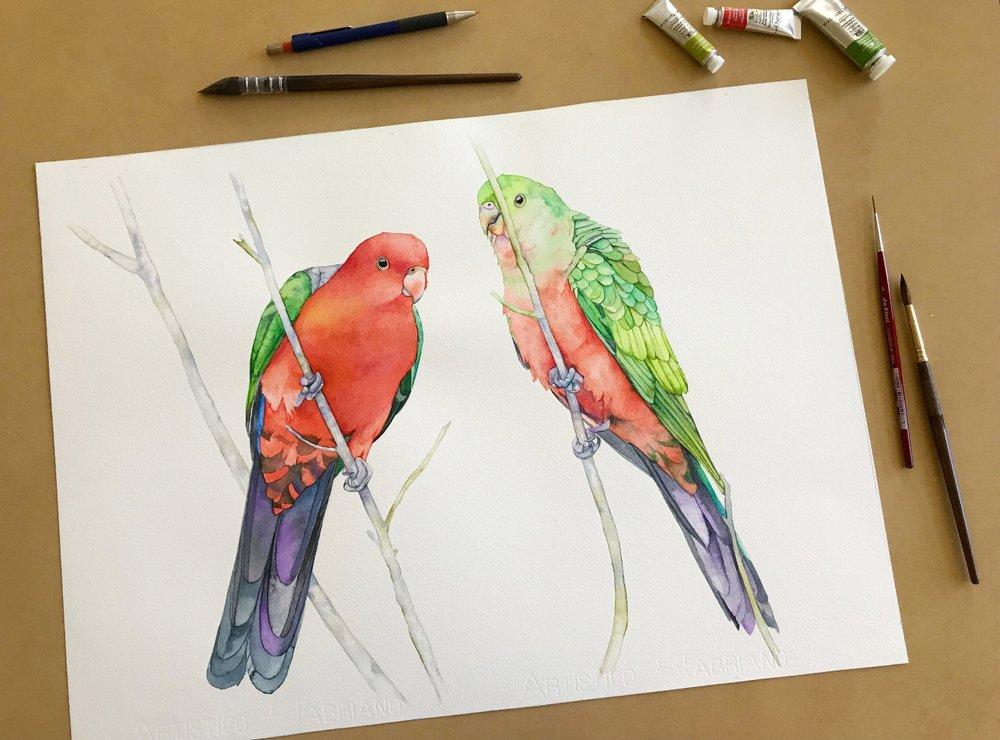 King Parrots original.jpg