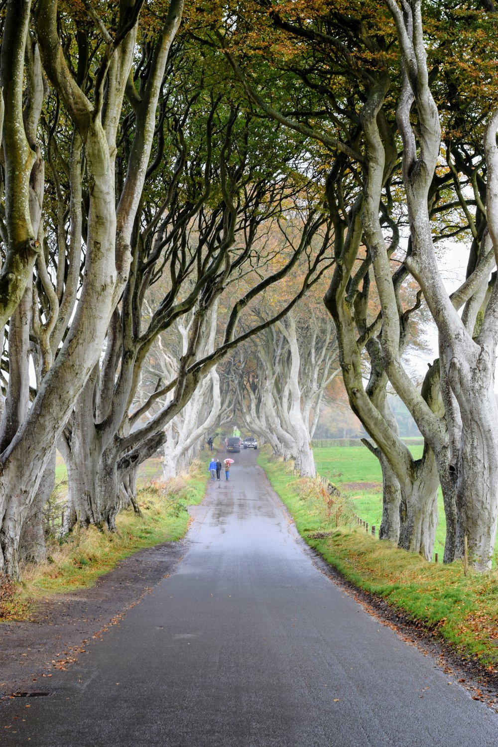The Dark Hedges; a recent storm knocked down several of the elm trees along the road leading to the gap between the trees on either side of the road. (Nikon D3300, 50mm, f/5, 1/100 sec, ISO 400)