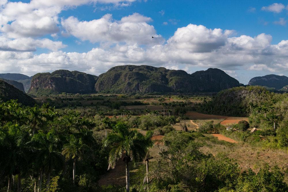 Cuba Selects-61.jpg