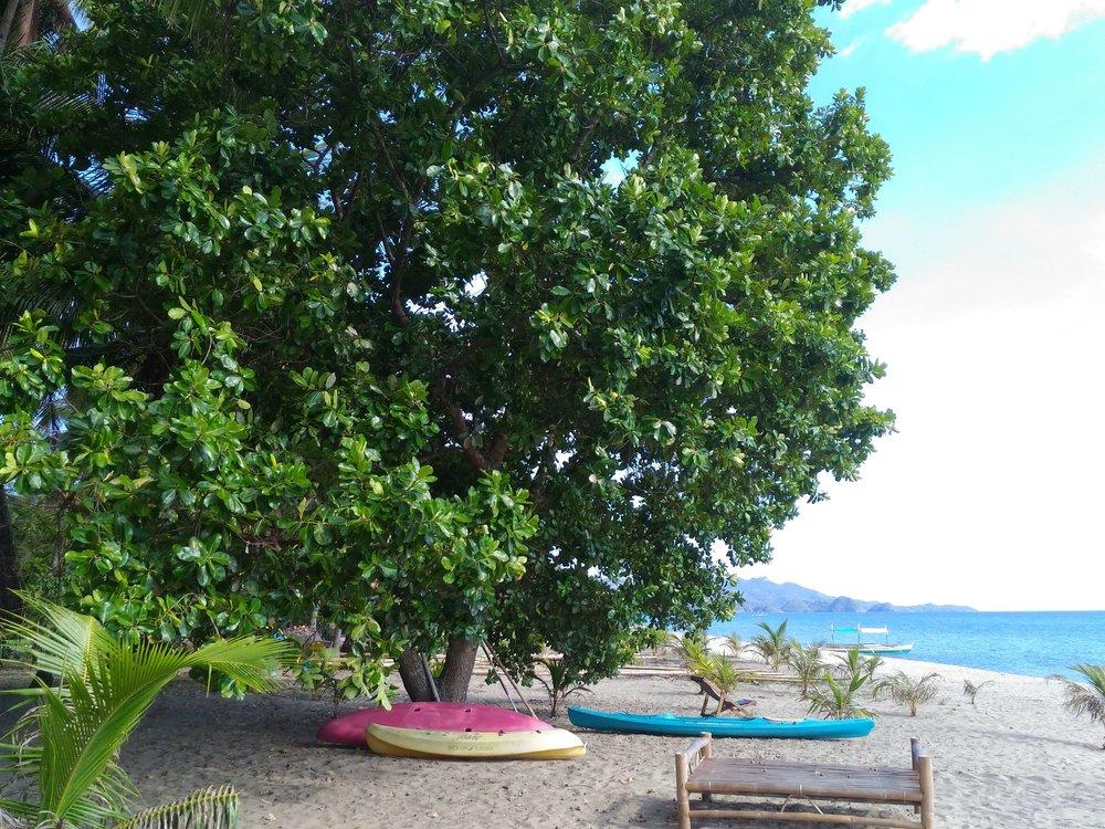 Lomboy Tree on the Beach