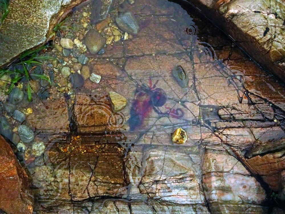 Lurking in the Murky Depths...  Photo by: Rowan Flint