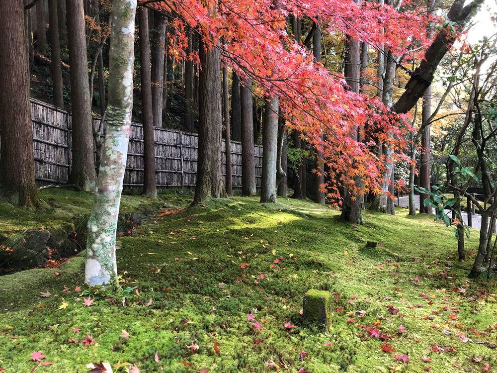 Japangardenblog.jpg