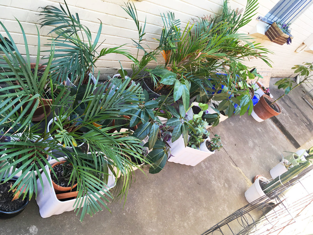 planttripblog.jpg