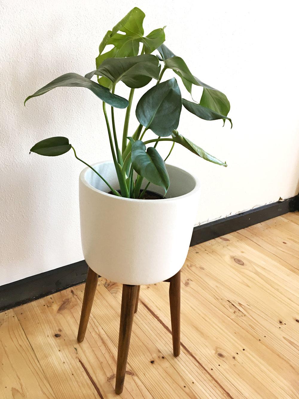 Plantstandblog.jpg