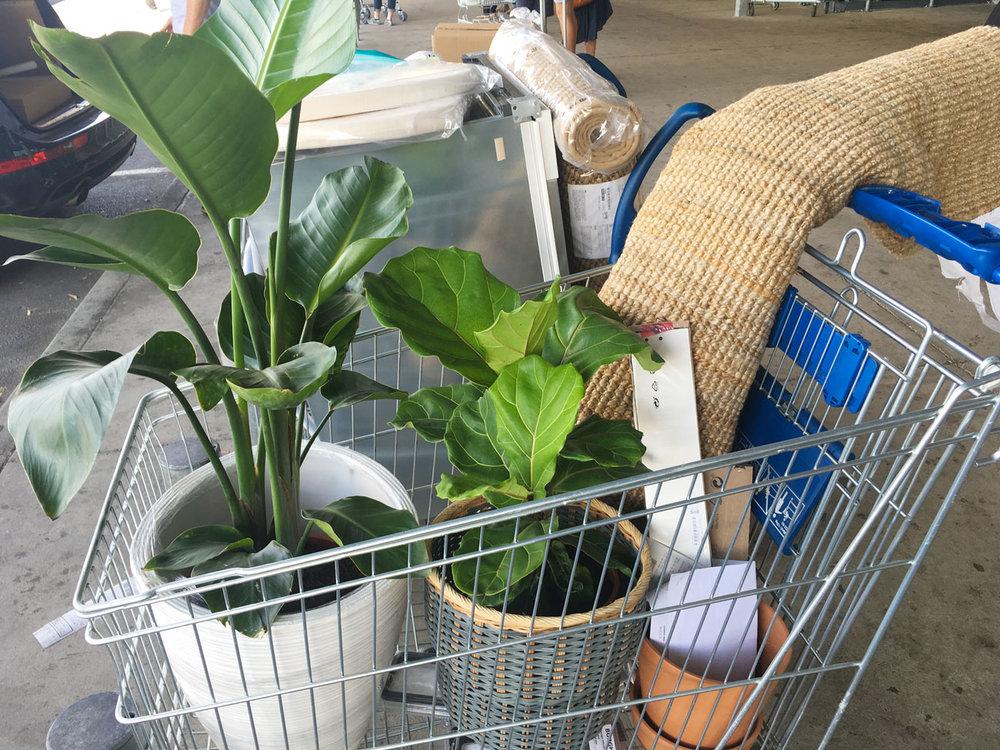planttrolleysmall.jpg