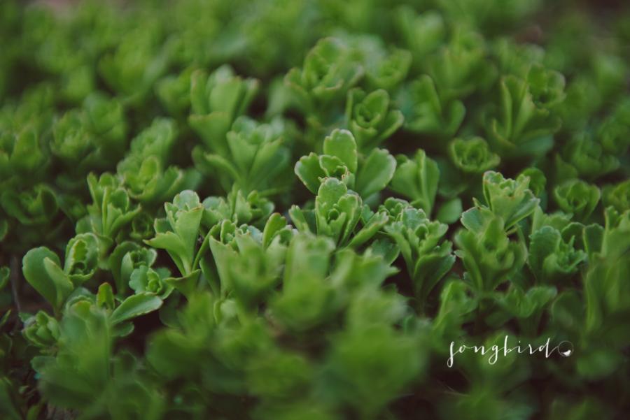 garden-4128