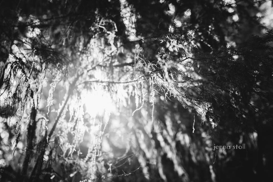 Jenna Stoll Photography_PNW-161.jpg