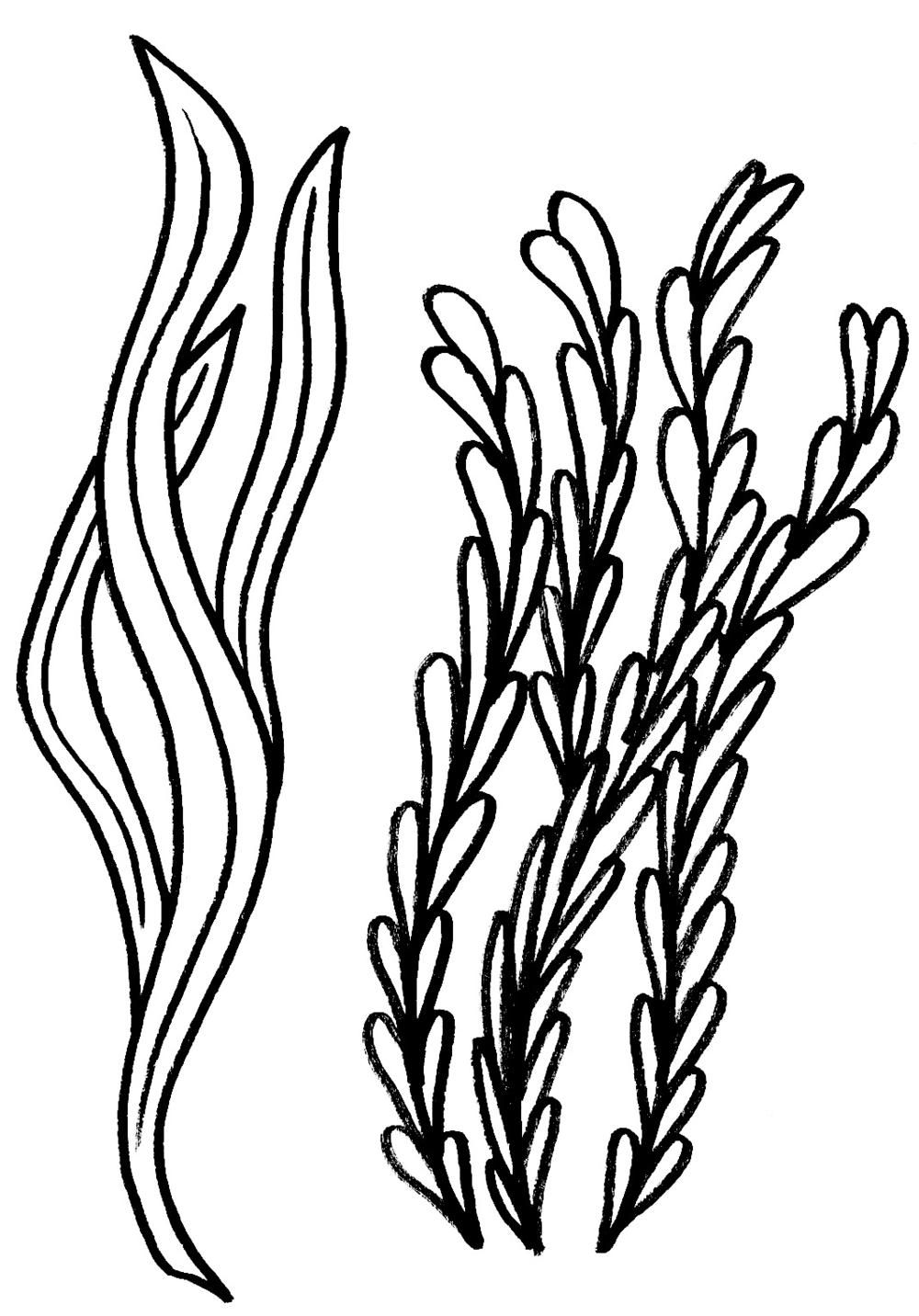 waterplantssketch.png