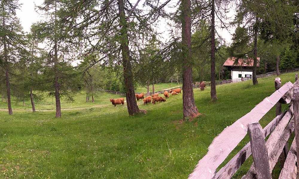berghuette-ausblick-hochlandrinder-weide-sommer.jpg