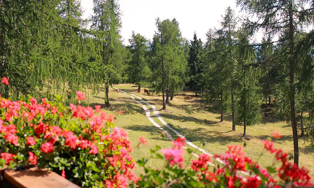 berghuette-balkon-ausblick-hochlandrinder-weide-sommer.jpg