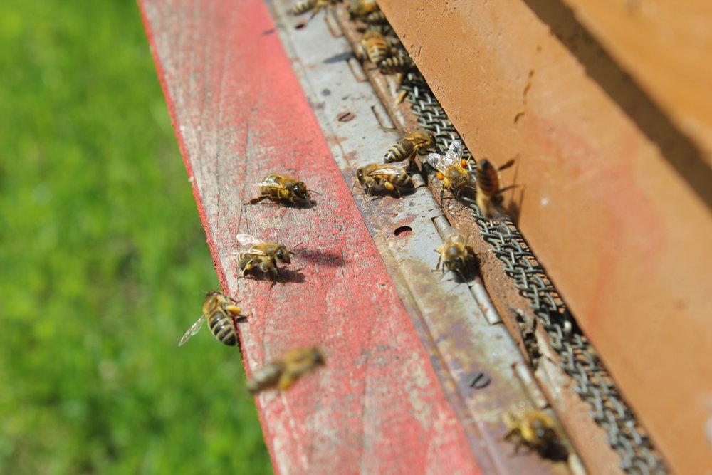 Die gelben Pollenhöschen