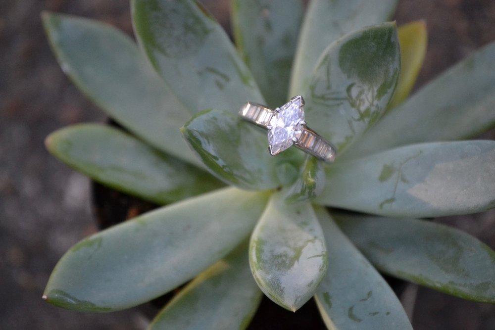 ring on succulent photo