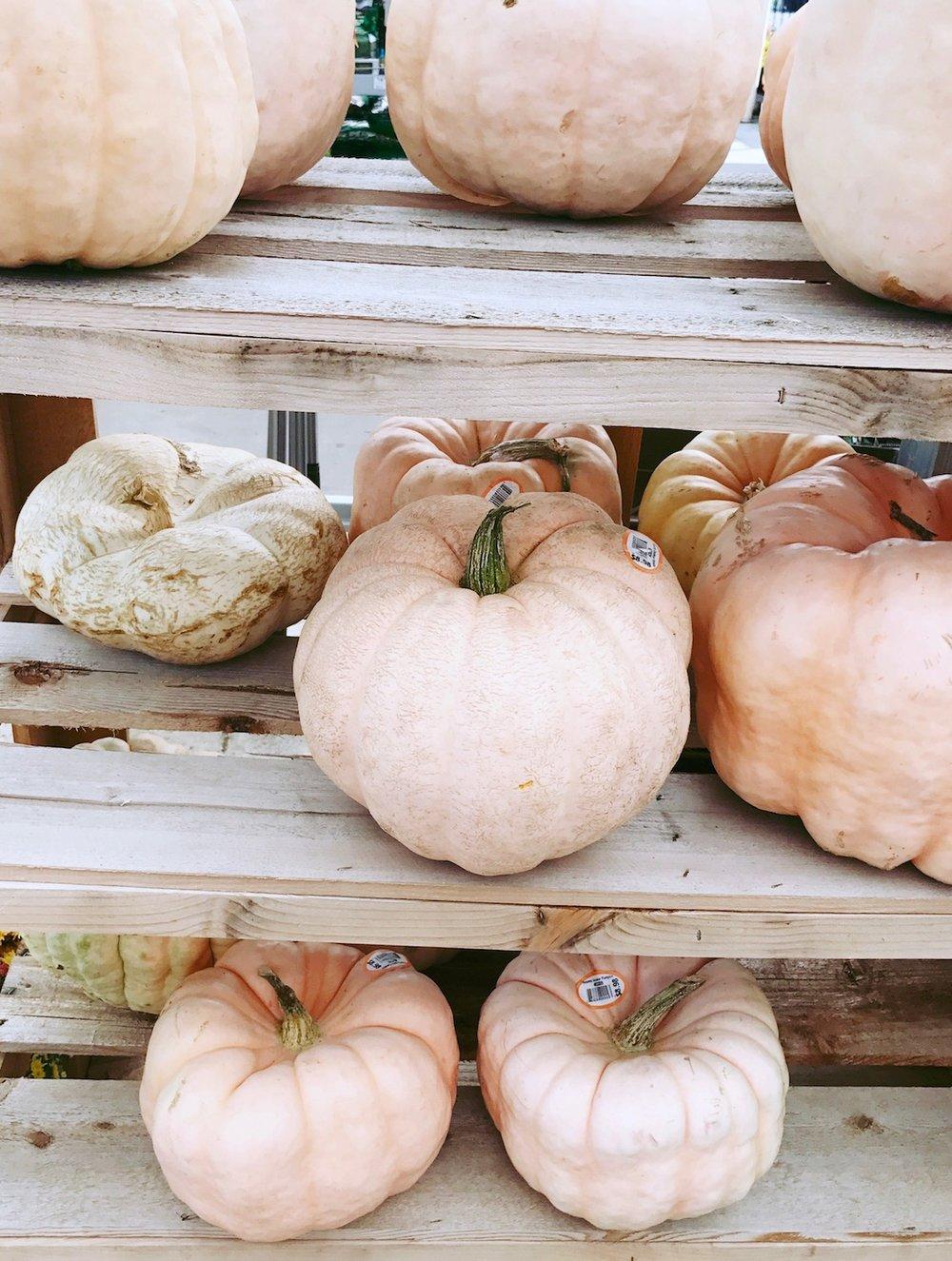pink pumpkins lowes.jpg