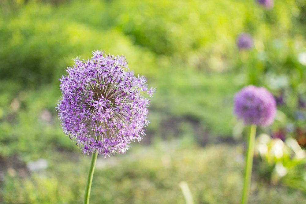 memphis botanic gardens.jpg
