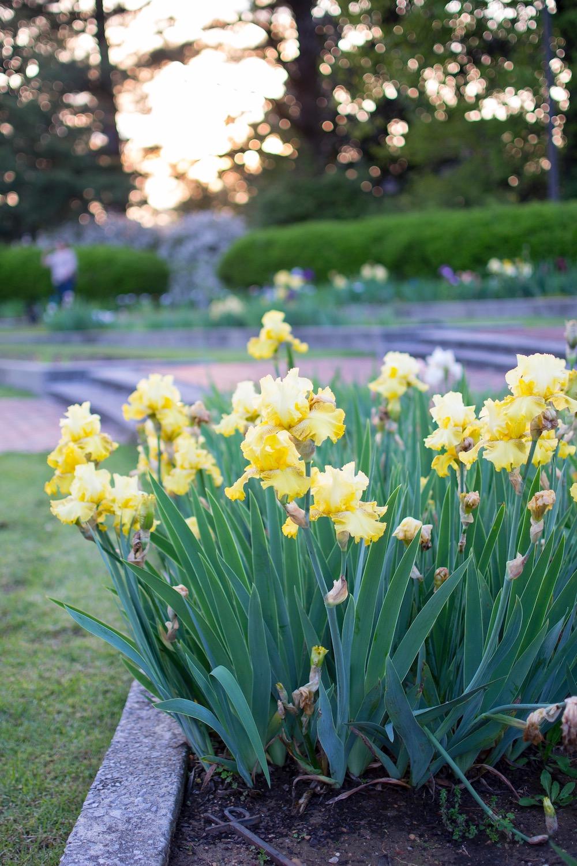 memphis florals.jpg