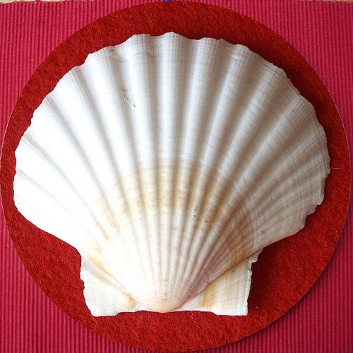 Jacob's shell