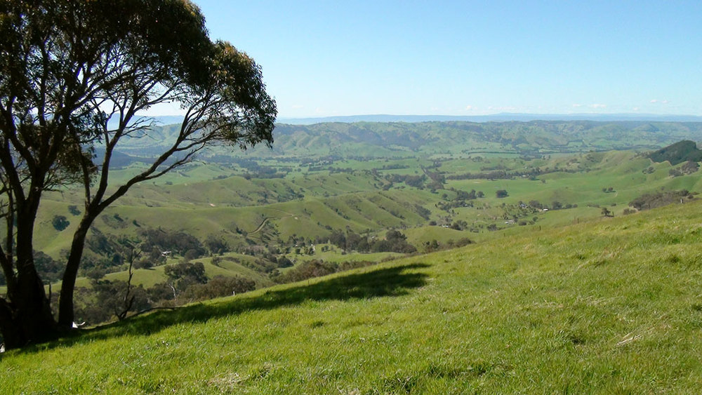 A beautiful view from the saddle of the Tallarook Ranges, along Horan Track.