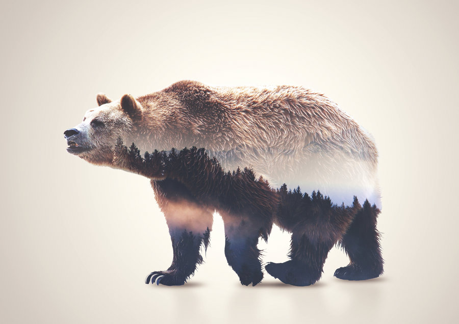 bear_double_exposure_by_alex_view-d8ud5gd.jpg