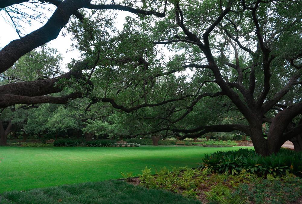 FIGURE 2 The Horseshoe at the Botanic Gardens
