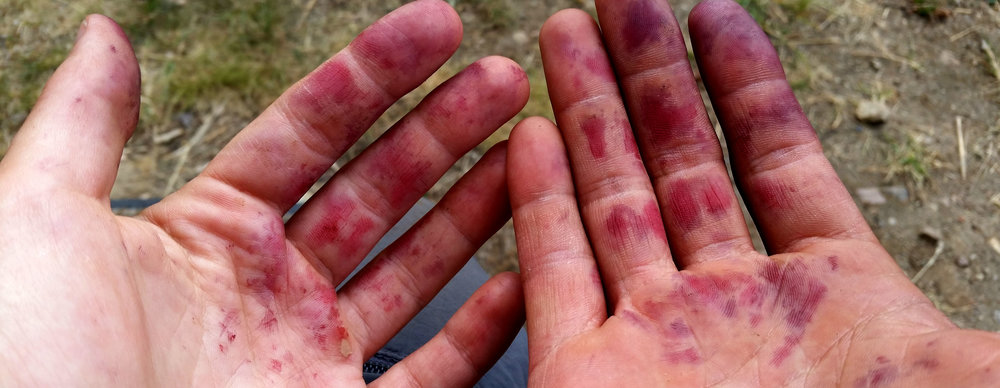 Berry-picking hands