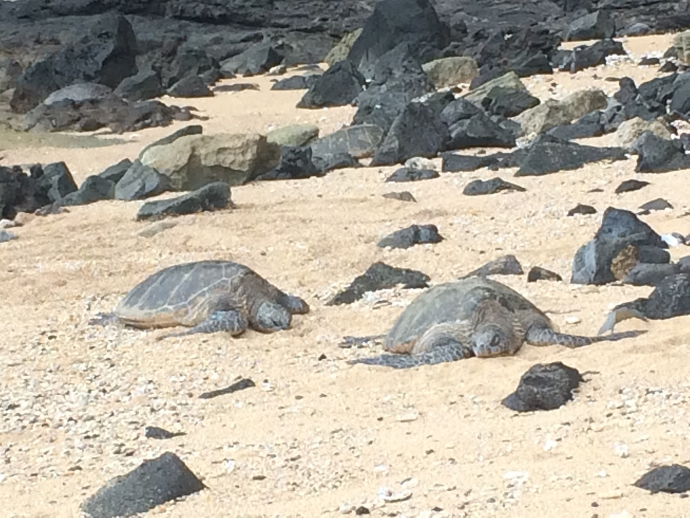 Turtles on the secluded beach blended in so well with the rocks!
