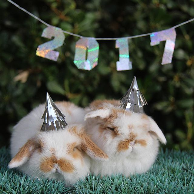 Goodbye 2016 Hello 2017! Azbunnies.com