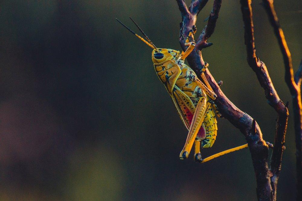 gouthaman-raveendran-41794-unsplash.jpg
