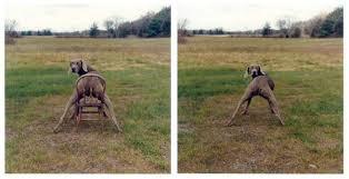 Lawn Chair  1998