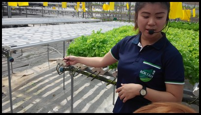 Ms. Fiona explained that the water that the plants receive are a combination of rainwater and nutrient solution required for plant growth.