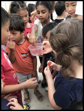 The children loved the sweet taste of cherry tomatoes.