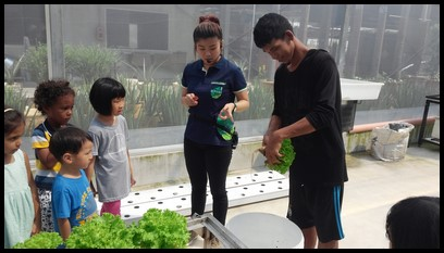 The children attentively observed how the roots are cut neatly from the lettuce.