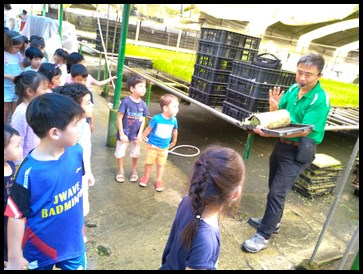 The kids learnt about how compost can be made from the roots of wheatgrass and how it is better for growing plants