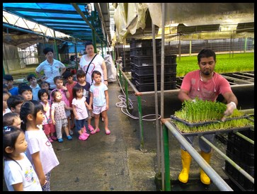 The children watched the farmers harvest the pea sprouts